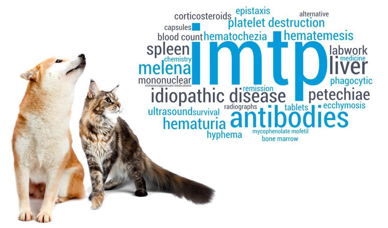 IMTP Adjunctive or Alternative Immunosuppressant Option