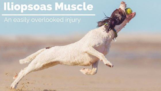 Iliopsoas Muscle Injury in Dogs