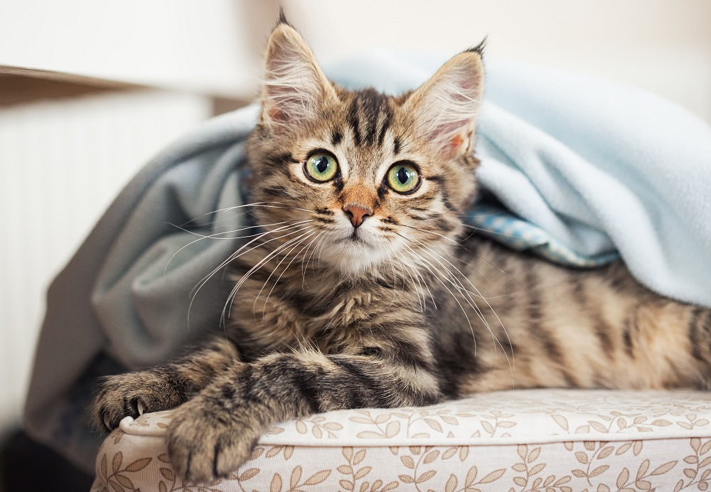 Common Eye Problems of Cats
