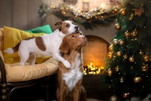 Avoiding a Holiday Pet Emergency