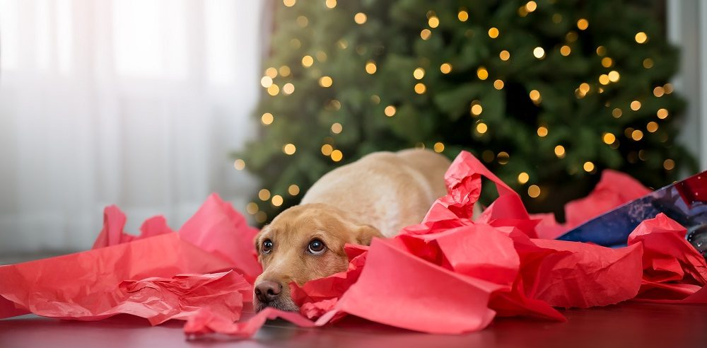 How to Avoid a Holiday Pet Emergency
