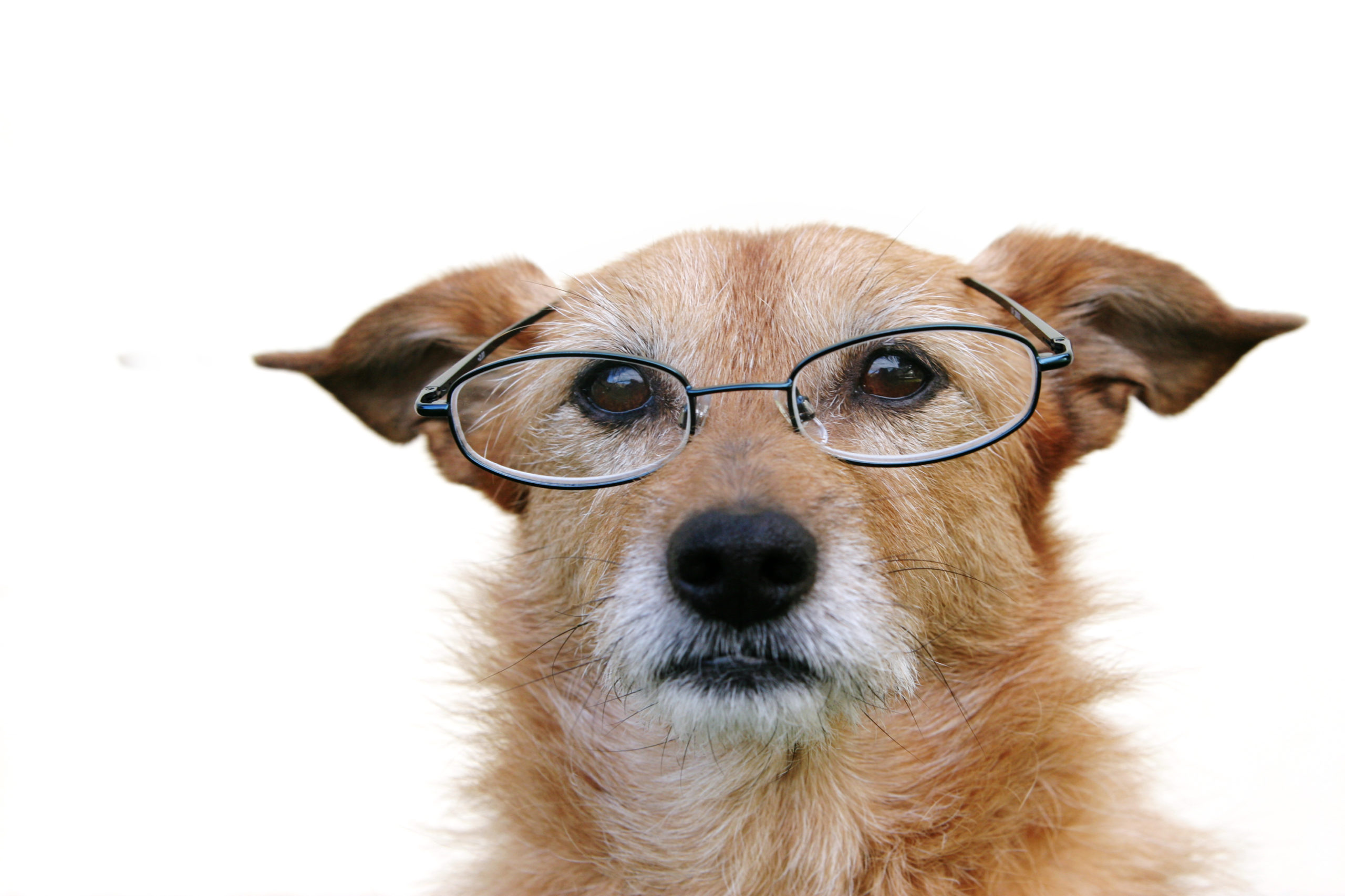 5 Signs Your Pet May Be Losing Their Vision